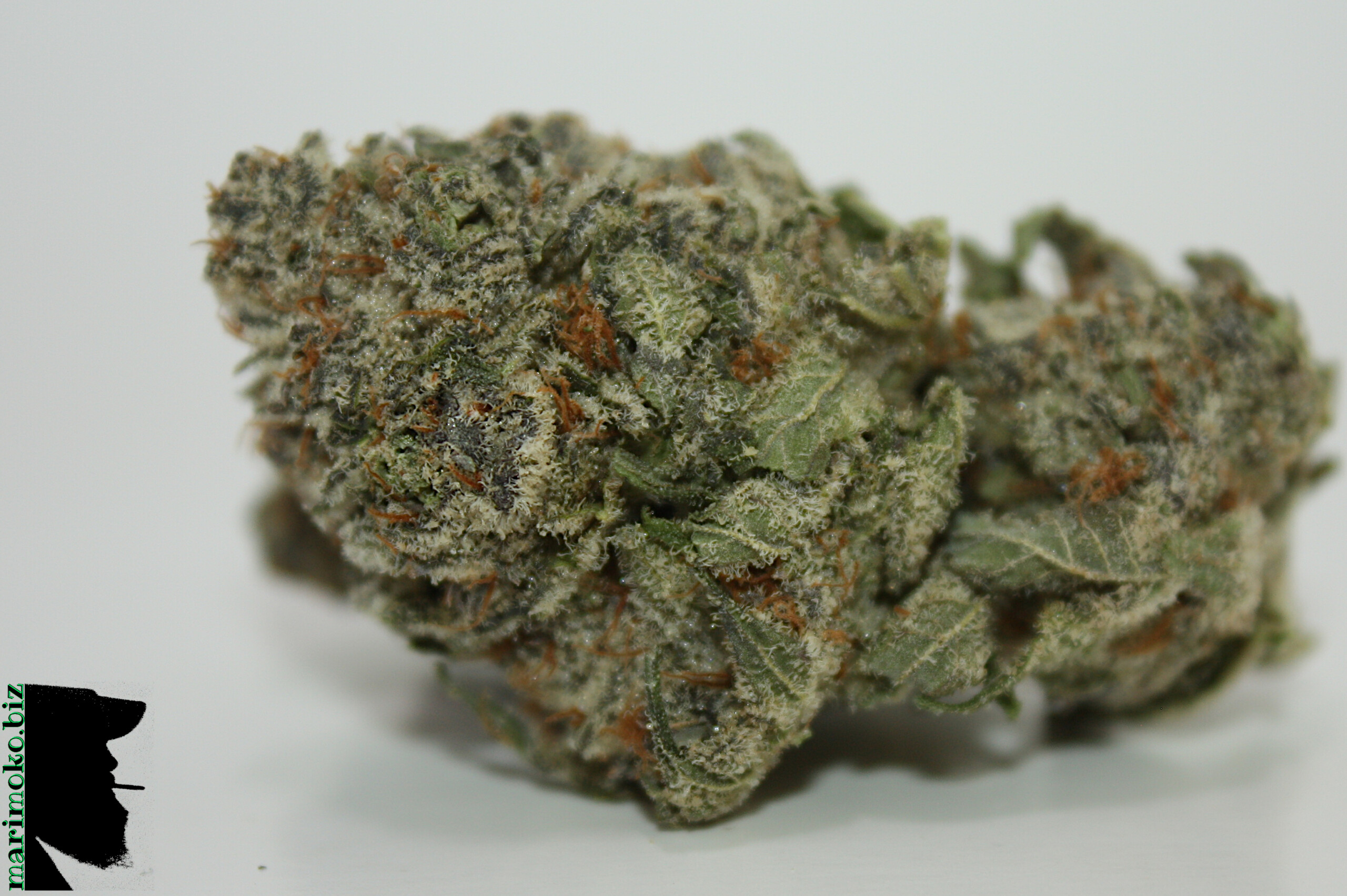 Blue Lights From BC Cann Co